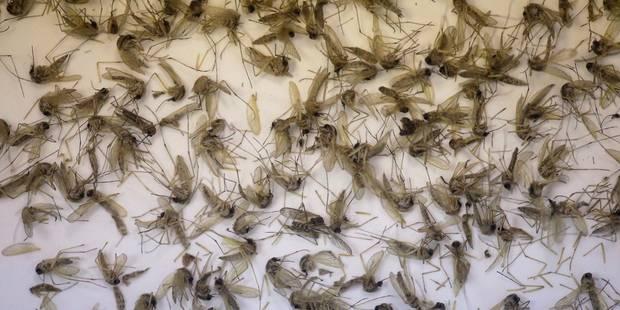 """Les autorités sanitaires évoquent 4 cas de Zika autochtones """"probables"""" en Floride - La Libre"""