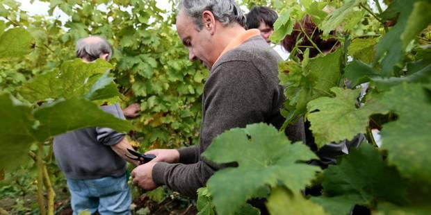 La production viticole belge s'annonce en baisse mais meilleure qu'en 2015 - La Libre