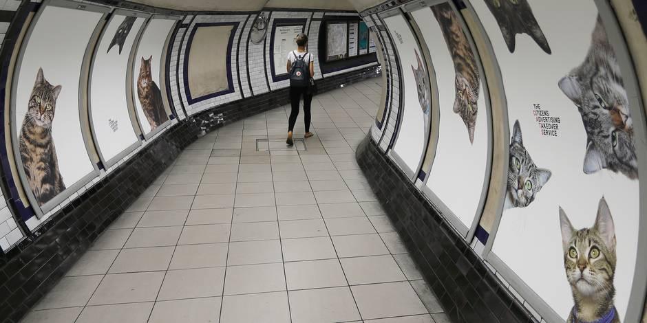 Pourquoi une station de métro est envahie de chats à Londres ?
