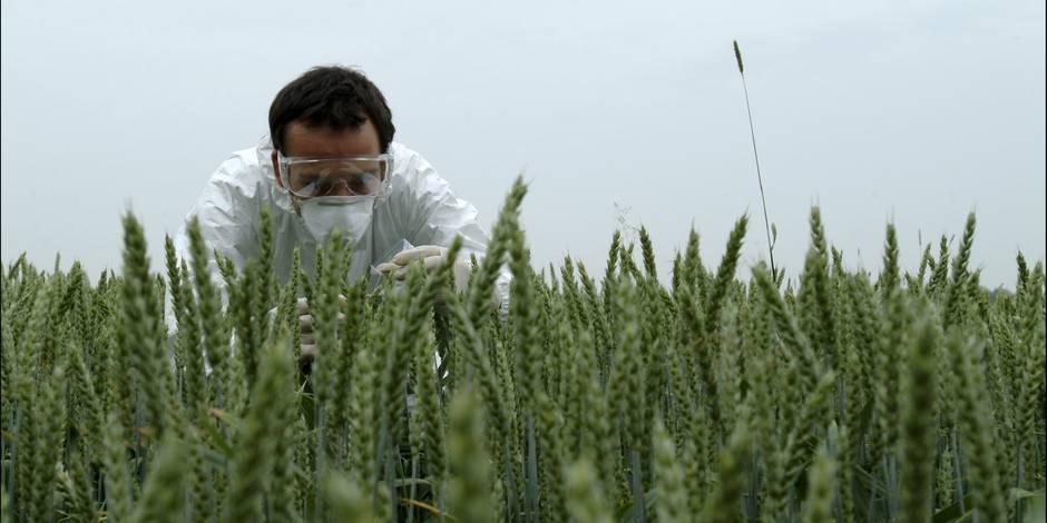 40% des études sur les OGM gangrénées par des conflits d'intérêt financiers