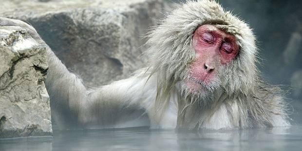 Les animaux accablés par le réchauffement climatique - La Libre