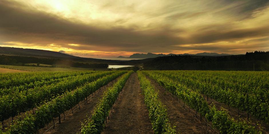 L'Afrique du Sud, la rencontre du vin et de l'Histoire