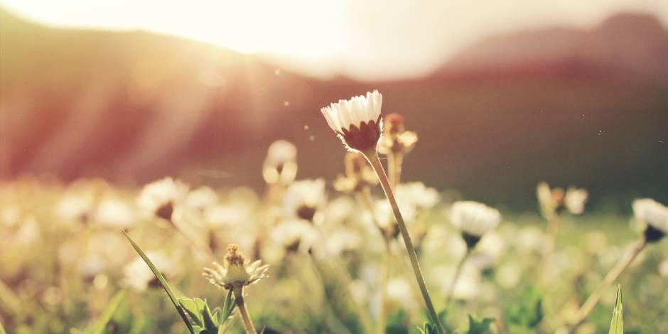 Cafés, terrasses, jardins : toutes les adresses pour profiter du printemps