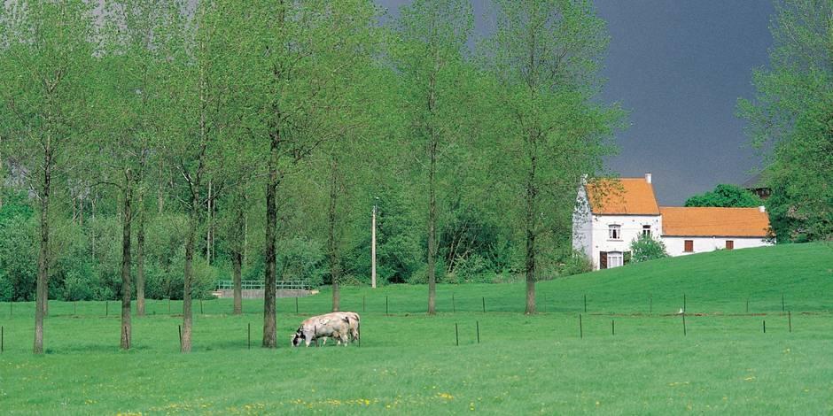 Un Belge sur huit vit dans une habitation malsaine