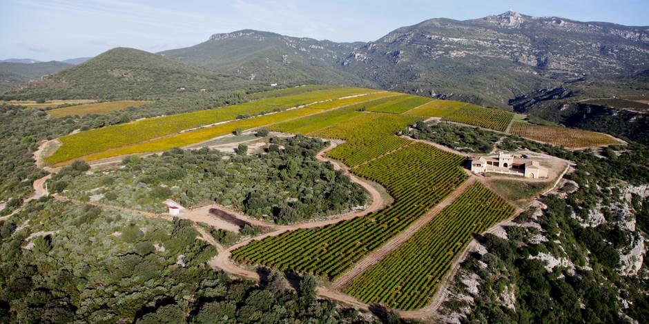 Au sommet du Languedoc : Une famille de terroirs et de supertalents