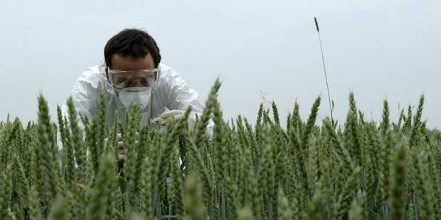 Des OGM dans les hosties consacrées (OPINION) - La Libre