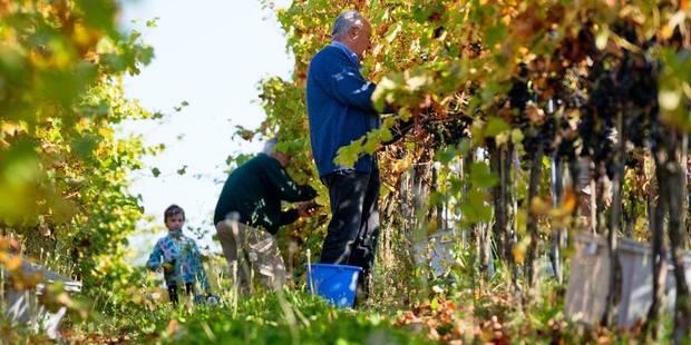 Année catastrophique pour le vin français: quid en Belgique? - La Libre