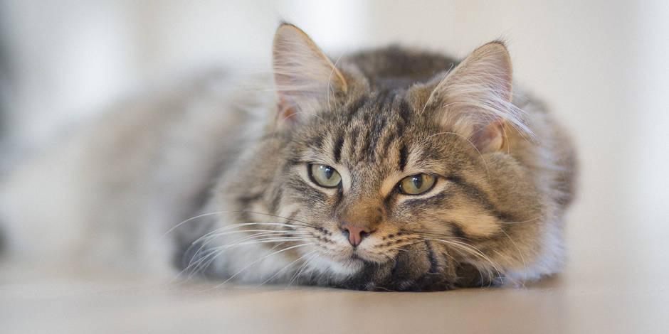 7 conseils précieux inspirés du chat pour apprendre à mieux vivre