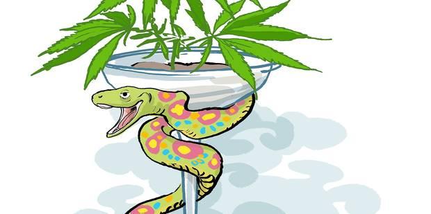 L'Uruguay innove avec la vente de cannabis en pharmacie (OPINION) - La Libre
