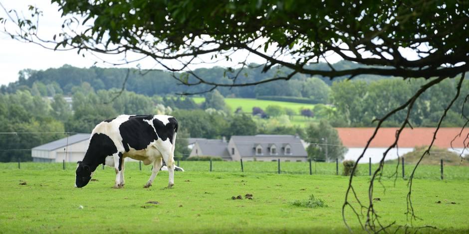 A quand un projet agro-écologique ambitieux pour la Wallonie? (OPINION)