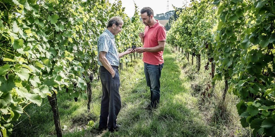 Le vin wallon n'a plus à rougir de sa qualité - La Libre