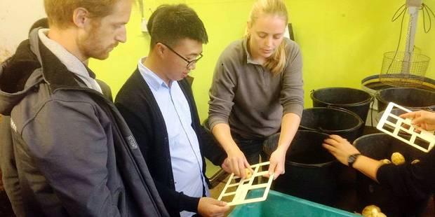Ath : création d'un centre belgo-chinois de la pomme de terre - La Libre