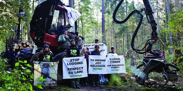 La Pologne abat la dernière forêt naturelle d'Europe - La Libre