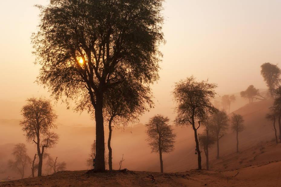 La brume matinale