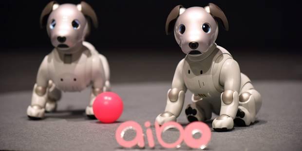 Sony dévoile la nouvelle version de son chien robot Aibo - La Libre
