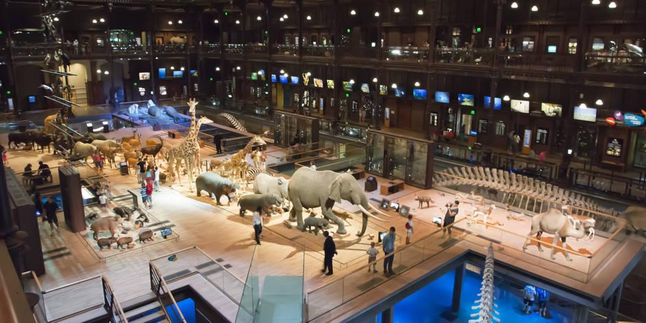 Gratuité des musées : et si ça rapportait ? (OPINION)