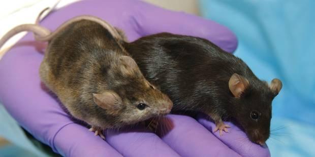 Stop à la souffrance animale dans les labos (OPINION) - La Libre