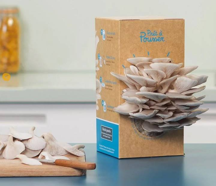 ses champignons (ici des pleurotes). En 15 jours, ils seront dans l'assiette si on les pschitte tous les jours ! Kit à champignons                                          Prêt à Pousser, 19.95€