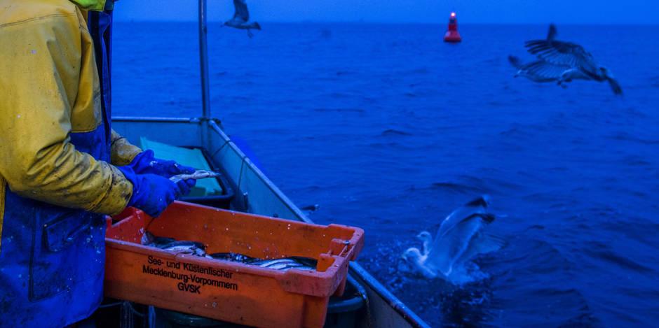 La pêche électrique sous le feu des critiques