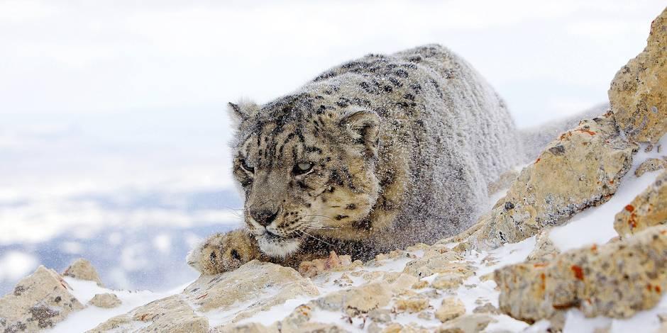 Le réchauffement climatique pourrait menacer la moitié des espèces animales