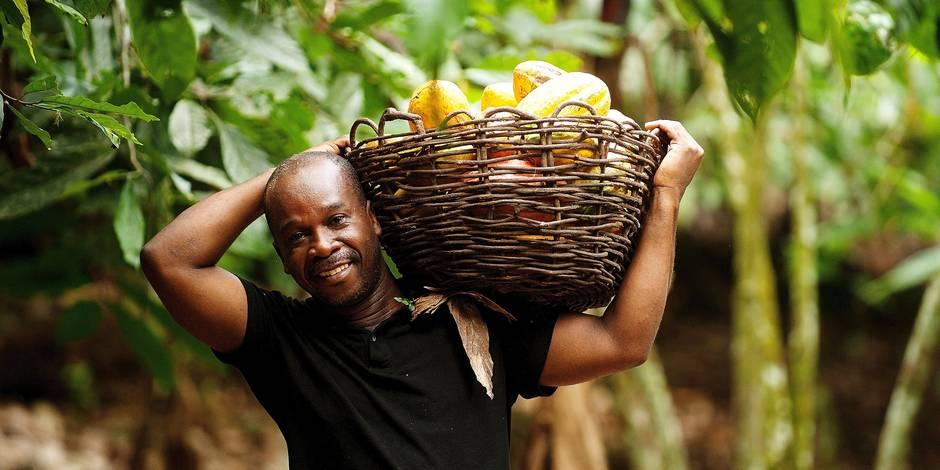 Le secteur du cacao reste miné par la pauvreté, le travail des enfants et la déforestation - La Libre